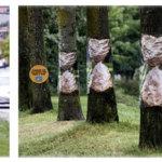 Реклама на деревьях